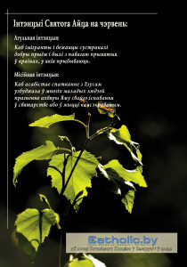 Str-3 copy
